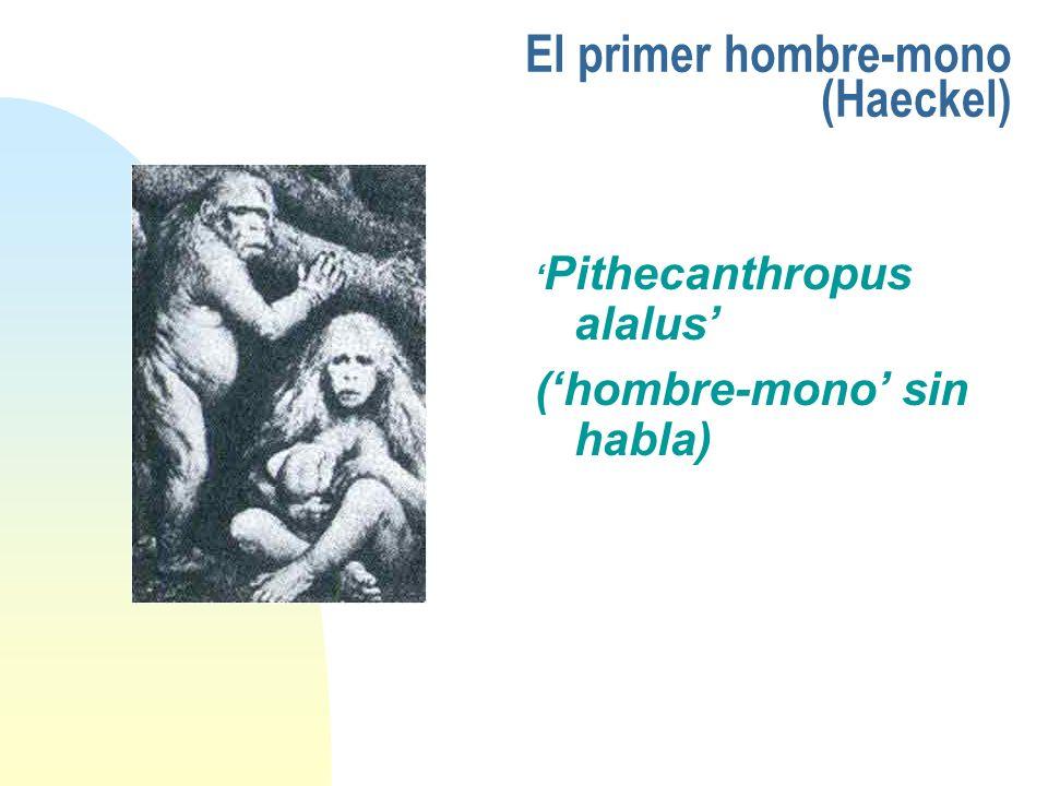 El primer hombre-mono (Haeckel) Pithecanthropus alalus (hombre-mono sin habla)