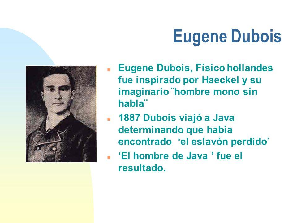 Eugene Dubois n Eugene Dubois, Físico hollandes fue inspirado por Haeckel y su imaginario ¨hombre mono sin habla¨ n 1887 Dubois viajó a Java determina