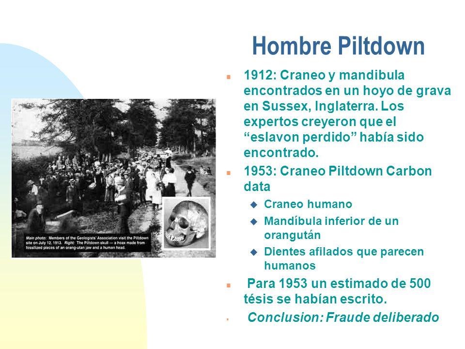 Hombre Piltdown n 1912: Craneo y mandibula encontrados en un hoyo de grava en Sussex, Inglaterra. Los expertos creyeron que el eslavon perdido habίa s