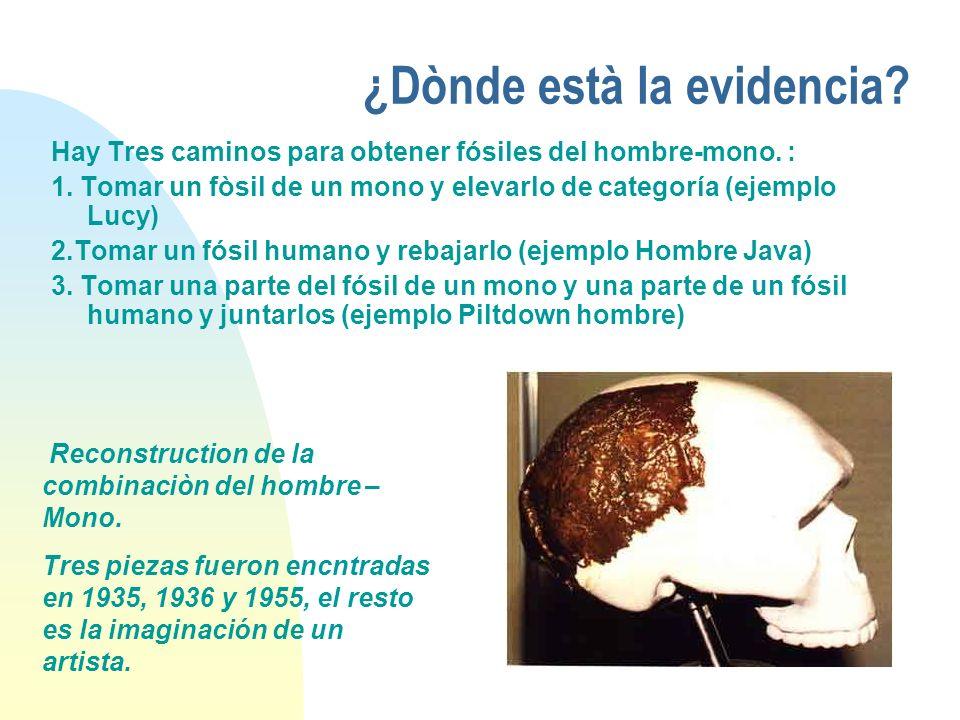 ¿Dònde està la evidencia? Hay Tres caminos para obtener fósiles del hombre-mono. : 1. Tomar un fòsil de un mono y elevarlo de categoría (ejemplo Lucy)