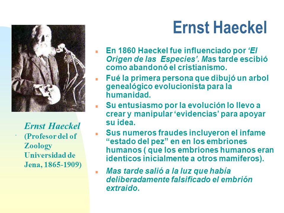n Alto: Haeckel ha sacado diferentes embriones (pescado, iguana, turtuga, pollo, conejo, humanos) mostrando una increible similitud en su temprano estado de desarrollo n Abajo: Las fotografios del Richardson (en 1987) como los embriones se miran en su verdadero estado de desarrollo: todos son completamente diferentes..