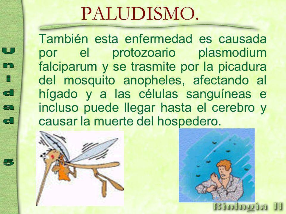 TRIPANOSOMIASIS. Esta enfermedad es causada por el protozoario trypanosoma cruzi, que lo transmiten las chinches que pican durante la noche a los huma