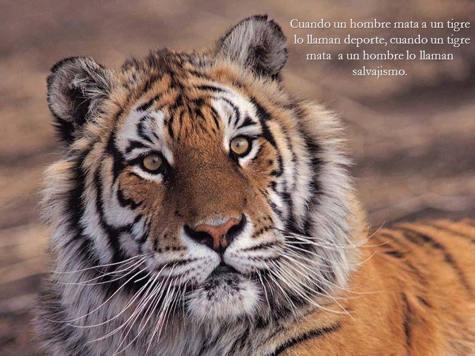 El hombre ha hecho de la Tierra un infierno para los animales. Arthur Schopenhauer