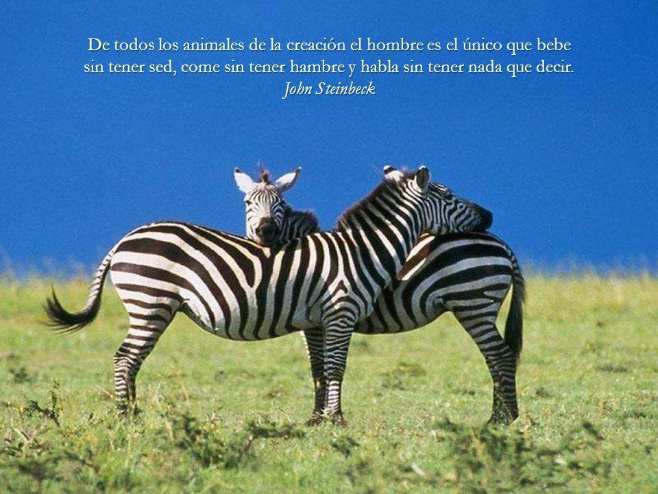 Los animales son buenos amigos, no hacen preguntas y tampoco critican. George Elliot George Elliot
