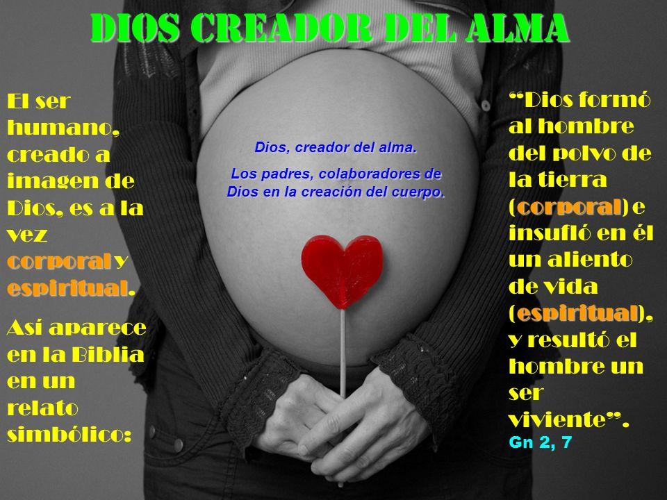 DIOS CREADOR DEL ALMA corporal espiritual El ser humano, creado a imagen de Dios, es a la vez corporal y espiritual.