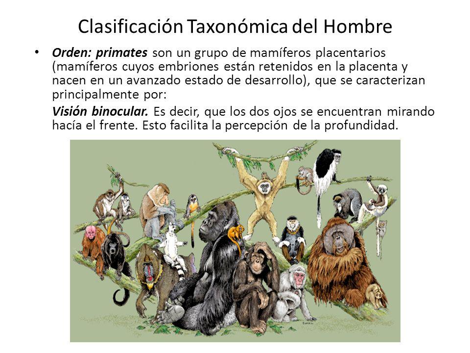 Clasificación Taxonómica del Hombre Orden: primates son un grupo de mamíferos placentarios (mamíferos cuyos embriones están retenidos en la placenta y nacen en un avanzado estado de desarrollo), que se caracterizan principalmente por: Visión binocular.