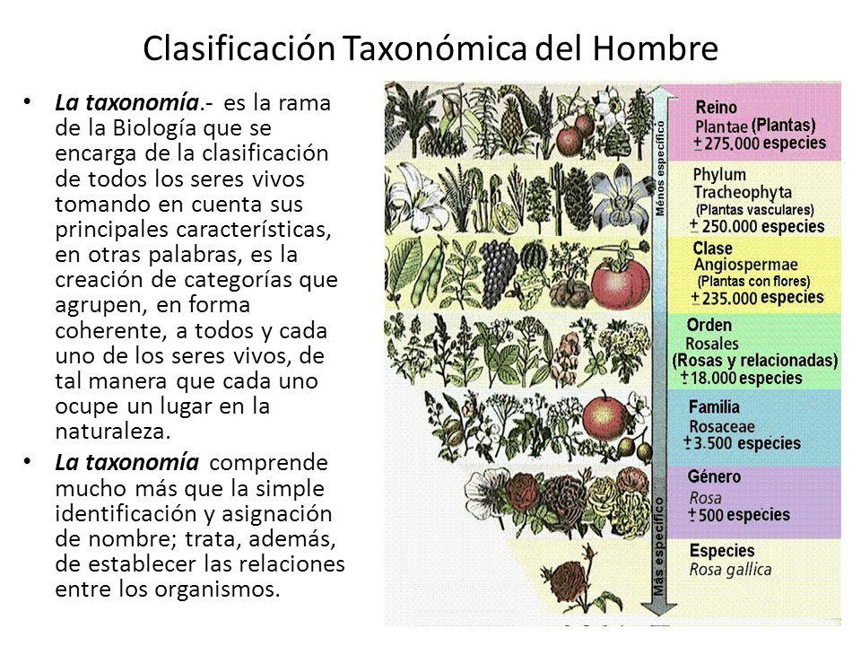 Clasificación Taxonómica del Hombre La taxonomía.- es la rama de la Biología que se encarga de la clasificación de todos los seres vivos tomando en cuenta sus principales características, en otras palabras, es la creación de categorías que agrupen, en forma coherente, a todos y cada uno de los seres vivos, de tal manera que cada uno ocupe un lugar en la naturaleza.