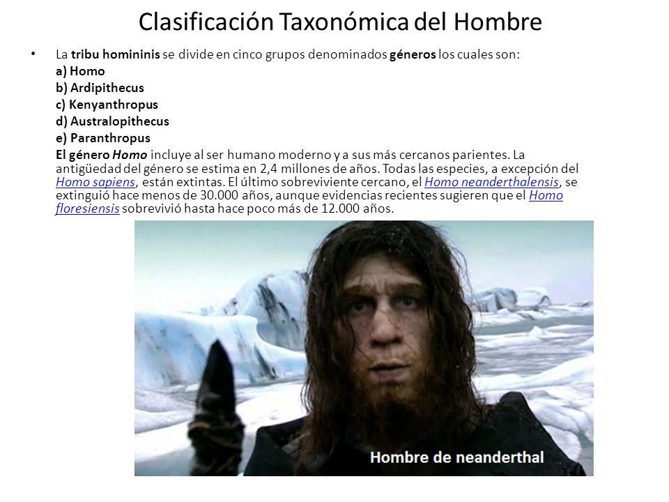 Clasificación Taxonómica del Hombre La tribu homininis se divide en cinco grupos denominados géneros los cuales son: a) Homo b) Ardipithecus c) Kenyanthropus d) Australopithecus e) Paranthropus El género Homo incluye al ser humano moderno y a sus más cercanos parientes.
