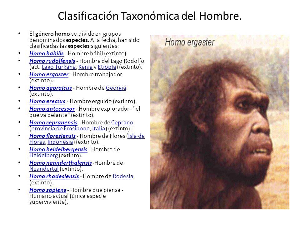 Clasificación Taxonómica del Hombre.El género homo se divide en grupos denominados especies.