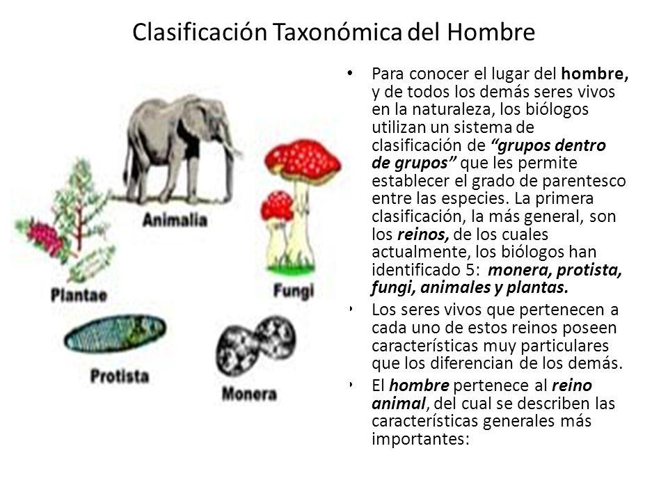 Clasificación Taxonómica del Hombre Para conocer el lugar del hombre, y de todos los demás seres vivos en la naturaleza, los biólogos utilizan un sistema de clasificación de grupos dentro de grupos que les permite establecer el grado de parentesco entre las especies.