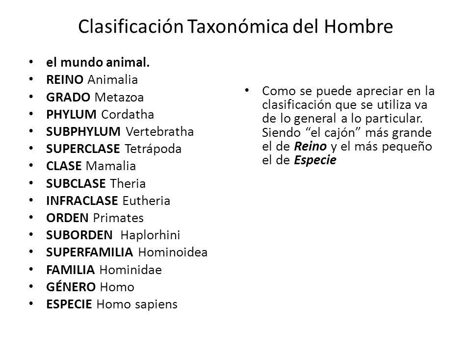 Clasificación Taxonómica del Hombre el mundo animal.