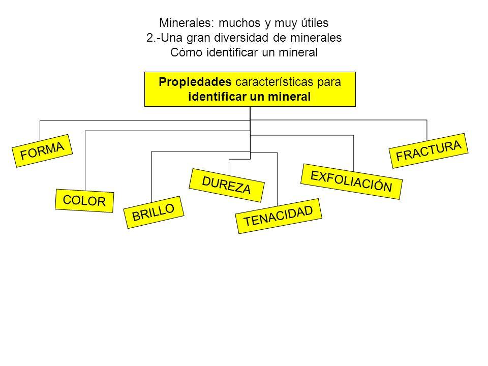 Minerales: muchos y muy útiles 2.-Una gran diversidad de minerales Cómo identificar un mineral Propiedades características para identificar un mineral FORMA COLOR BRILLO DUREZA TENACIDAD EXFOLIACIÓN FRACTURA
