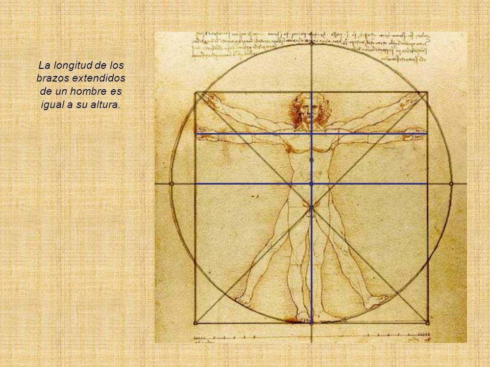 y que el espacio entre las piernas será un triángulo equilátero.