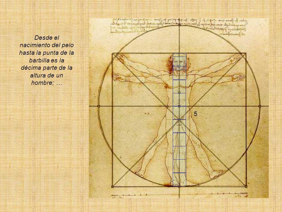 Desde los pezones a la parte de arriba de la cabeza será la cuarta parte del hombre y también la anchura mayor de los hombros contiene en sí misma la