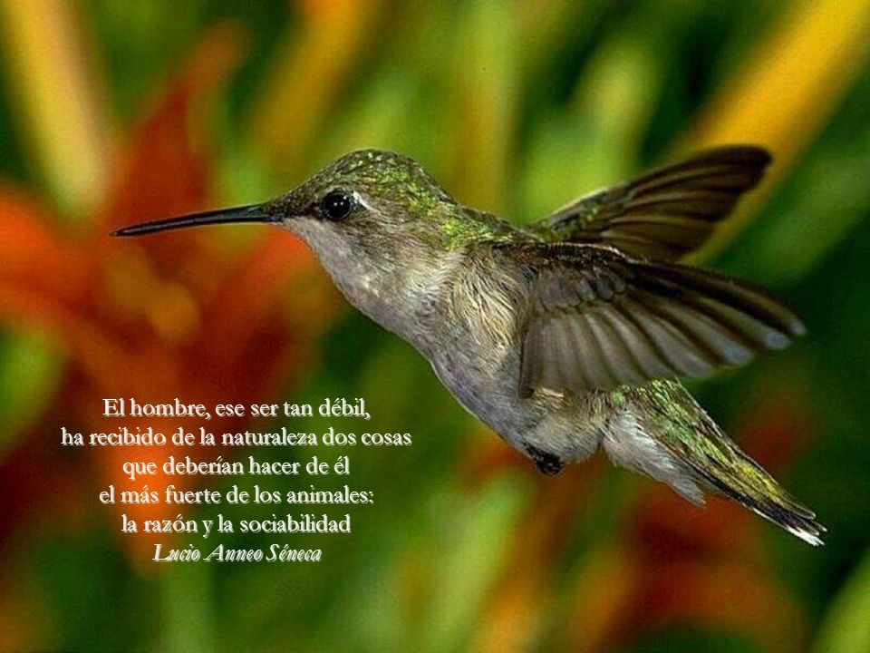 De todos los animales de la creación el hombre es el único que bebe sin tener sed, come sin tener hambre y habla sin tener nada que decir. John Steinb
