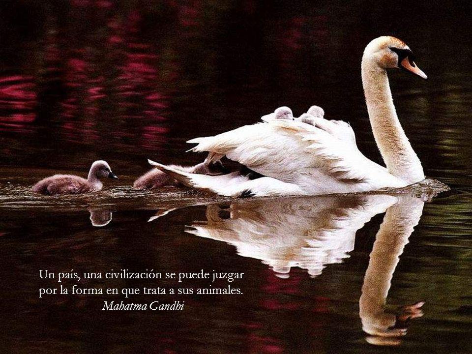 El hombre, ese ser tan débil, ha recibido de la naturaleza dos cosas que deberían hacer de él el más fuerte de los animales: la razón y la sociabilida