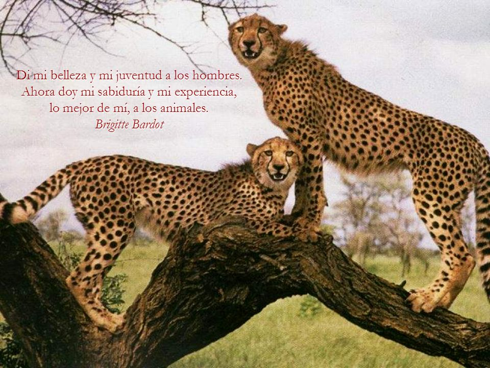 Un país, una civilización se puede juzgar por la forma en que trata a sus animales.