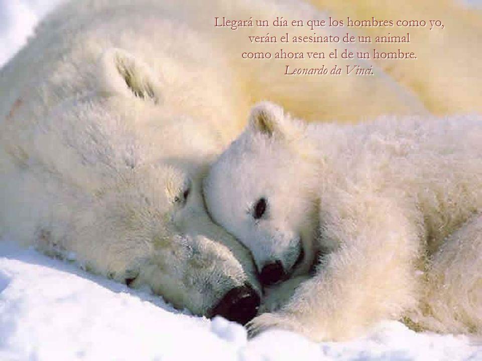 Di mi belleza y mi juventud a los hombres. Ahora doy mi sabiduría y mi experiencia, lo mejor de mí, a los animales. Brigitte Bardot