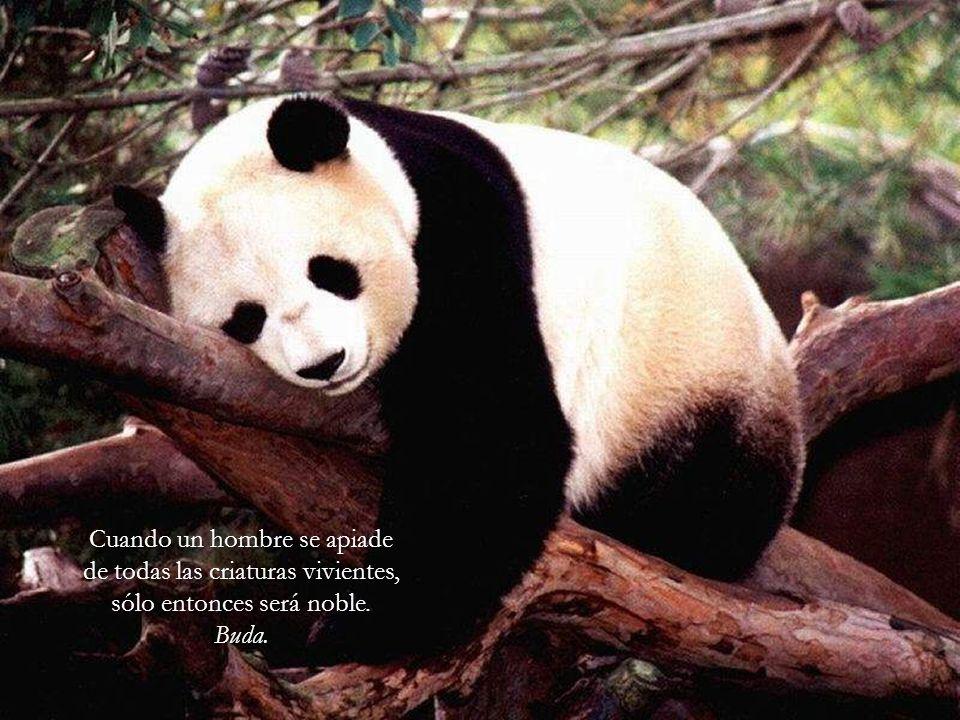 Es increíble y vergonzoso que ni predicadores ni moralistas eleven más su voz contra los abusos hacia los animales.