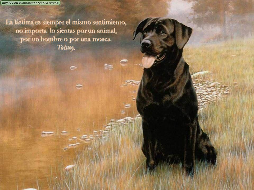 No sabía que se podía querer tanto a un animal, hasta que tuve uno, me enseñó muchas cosas, pero la que más, querer sin condiciones...