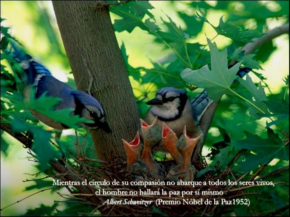 La lástima es siempre el mismo sentimiento, no importa lo sientas por un animal, por un hombre o por una mosca. Tolstoy.