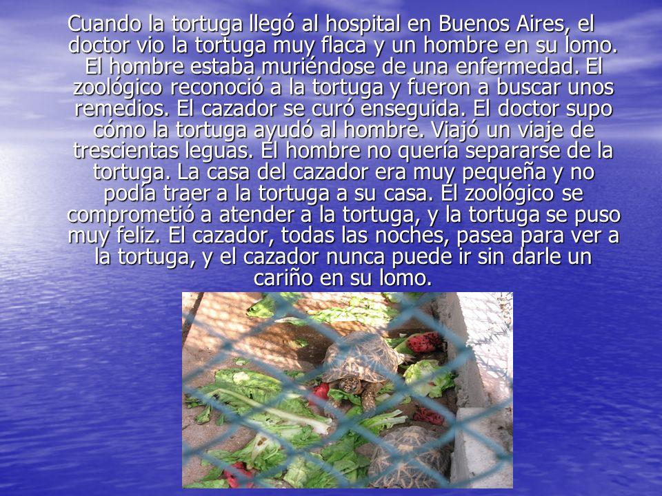 Cuando la tortuga llegó al hospital en Buenos Aires, el doctor vio la tortuga muy flaca y un hombre en su lomo. El hombre estaba muriéndose de una enf