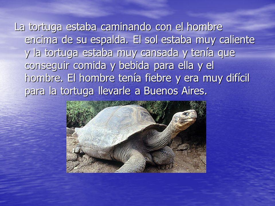 La tortuga estaba caminando con el hombre encima de su espalda. El sol estaba muy caliente y la tortuga estaba muy cansada y tenía que conseguir comid