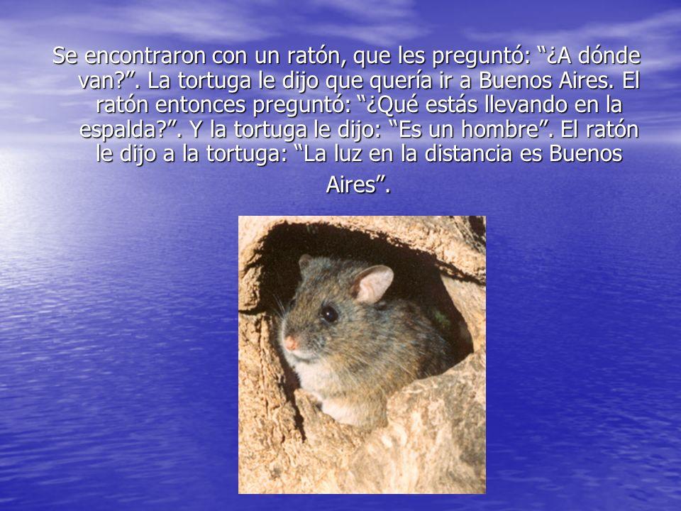 Se encontraron con un ratón, que les preguntó: ¿A dónde van?. La tortuga le dijo que quería ir a Buenos Aires. El ratón entonces preguntó: ¿Qué estás