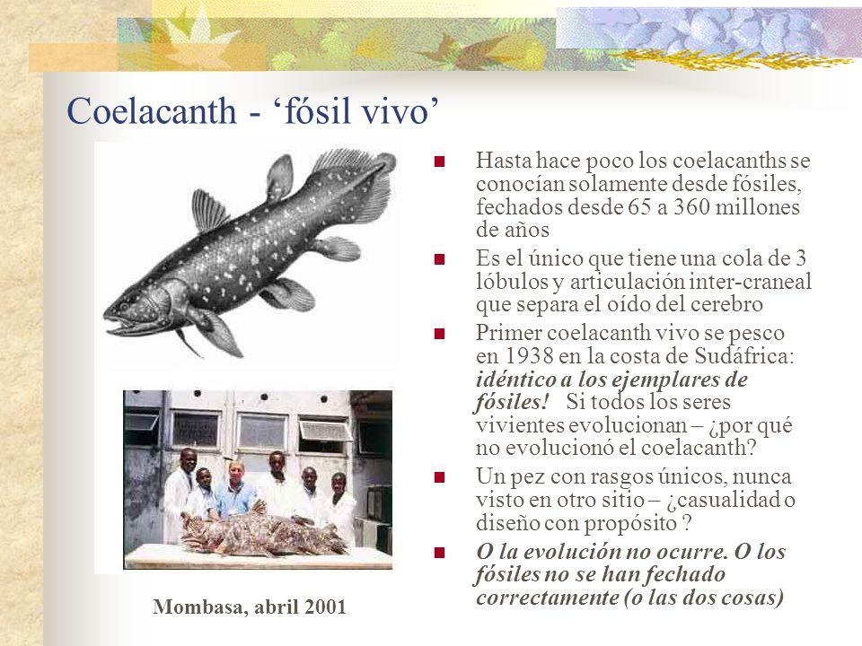 Coelacanth - fósil vivo Hasta hace poco los coelacanths se conocían solamente desde fósiles, fechados desde 65 a 360 millones de años Es el único que tiene una cola de 3 lóbulos y articulación inter-craneal que separa el oído del cerebro Primer coelacanth vivo se pesco en 1938 en la costa de Sudáfrica: idéntico a los ejemplares de fósiles.