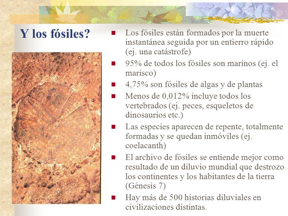 Y los fósiles? Los fósiles están formados por la muerte instantánea seguida por un entierro rápido (ej. una catástrofe) 95% de todos los fósiles son m