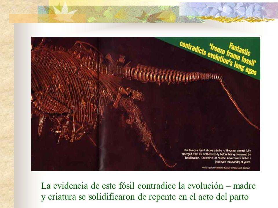 La evidencia de este fósil contradice la evolución – madre y criatura se solidificaron de repente en el acto del parto