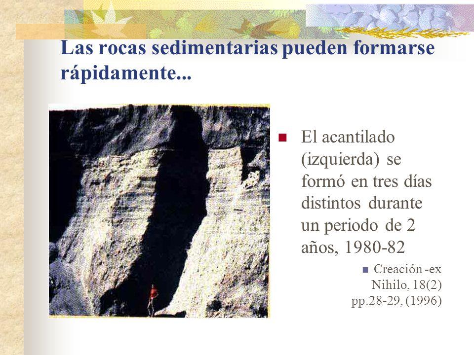 Las rocas sedimentarias pueden formarse rápidamente... El acantilado (izquierda) se formó en tres días distintos durante un periodo de 2 años, 1980-82