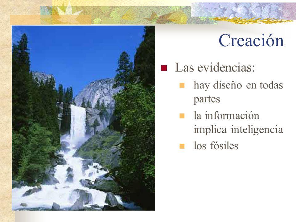 Creación Las evidencias: hay diseño en todas partes la información implica inteligencia los fósiles