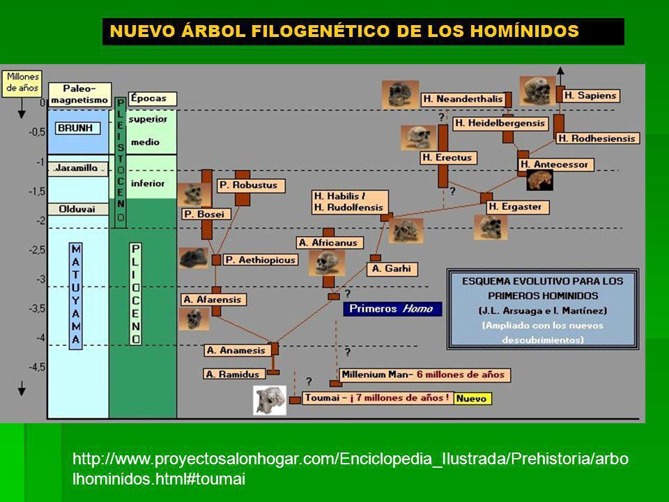 NUEVO ÁRBOL FILOGENÉTICO DE LOS HOMÍNIDOS http://www.proyectosalonhogar.com/Enciclopedia_Ilustrada/Prehistoria/arbo lhominidos.html#toumai