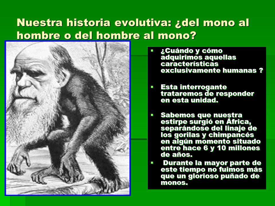Nuestra historia evolutiva: ¿del mono al hombre o del hombre al mono? ¿Cuándo y cómo adquirimos aquellas características exclusivamente humanas ? ¿Cuá