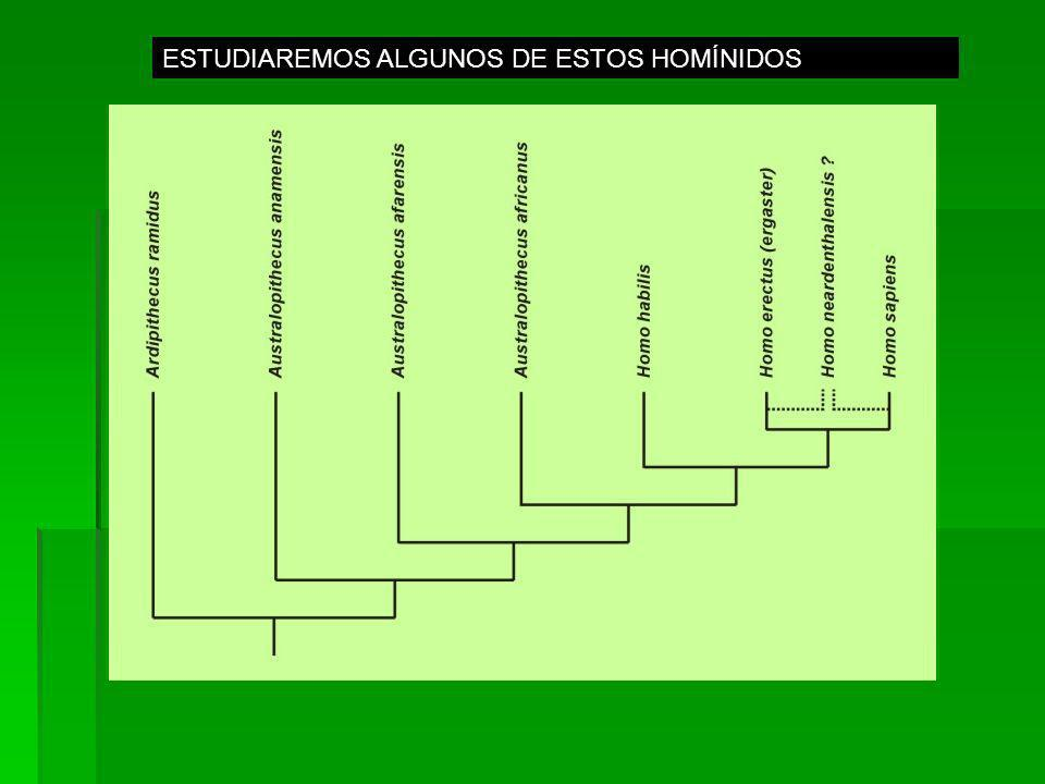 ESTUDIAREMOS ALGUNOS DE ESTOS HOMÍNIDOS