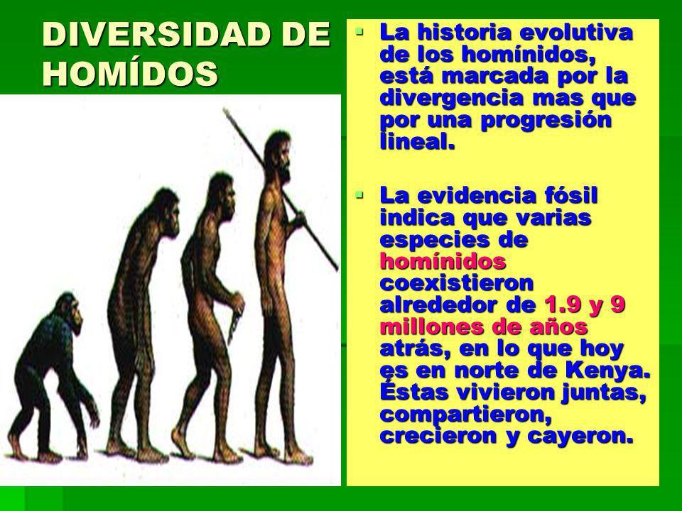 DIVERSIDAD DE HOMÍDOS La historia evolutiva de los homínidos, está marcada por la divergencia mas que por una progresión lineal. La historia evolutiva