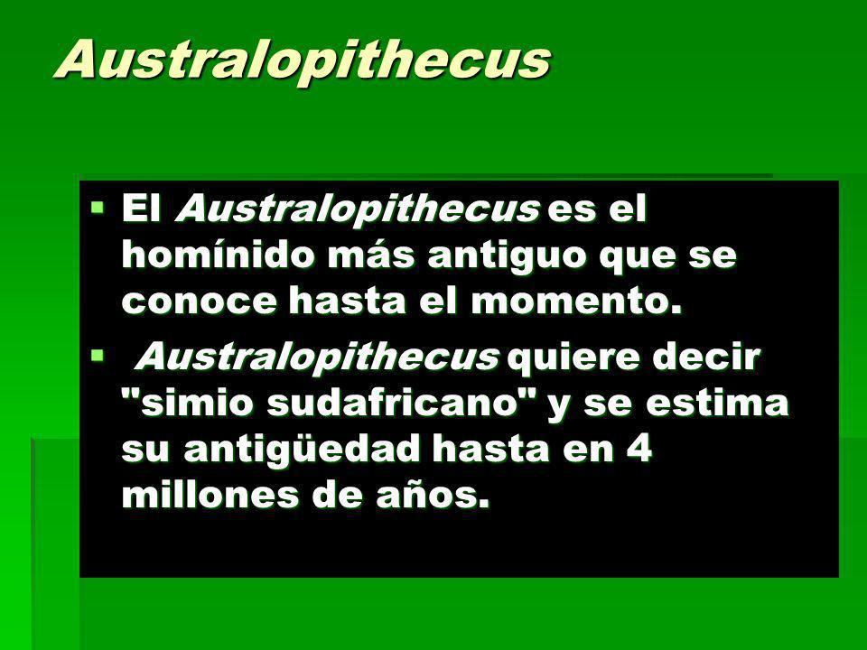 Australopithecus El Australopithecus es el homínido más antiguo que se conoce hasta el momento. El Australopithecus es el homínido más antiguo que se
