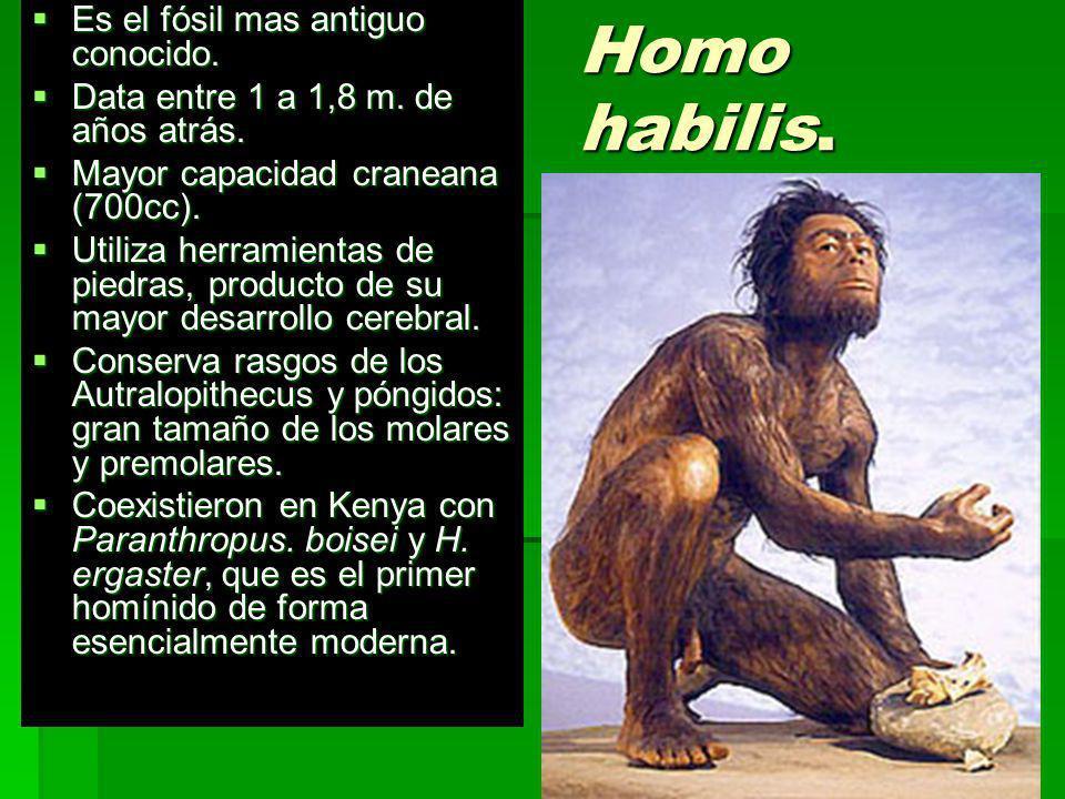 Homo habilis. Es el fósil mas antiguo conocido. Es el fósil mas antiguo conocido. Data entre 1 a 1,8 m. de años atrás. Data entre 1 a 1,8 m. de años a