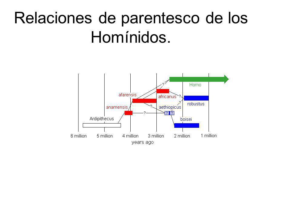 Relaciones de parentesco de los Homínidos.