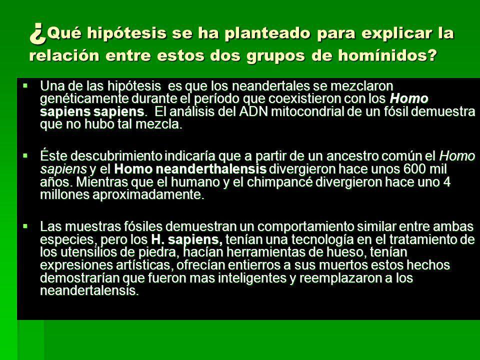 ¿ Qué hipótesis se ha planteado para explicar la relación entre estos dos grupos de homínidos? Una de las hipótesis es que los neandertales se mezclar