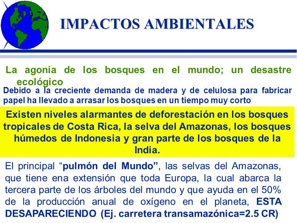 IMPACTOS AMBIENTALES DETERIORO DE LA FLORA Cada vez se dispone en el mundo de menos plantas verdes para realizar el proceso de fotosíntesis. En el mun