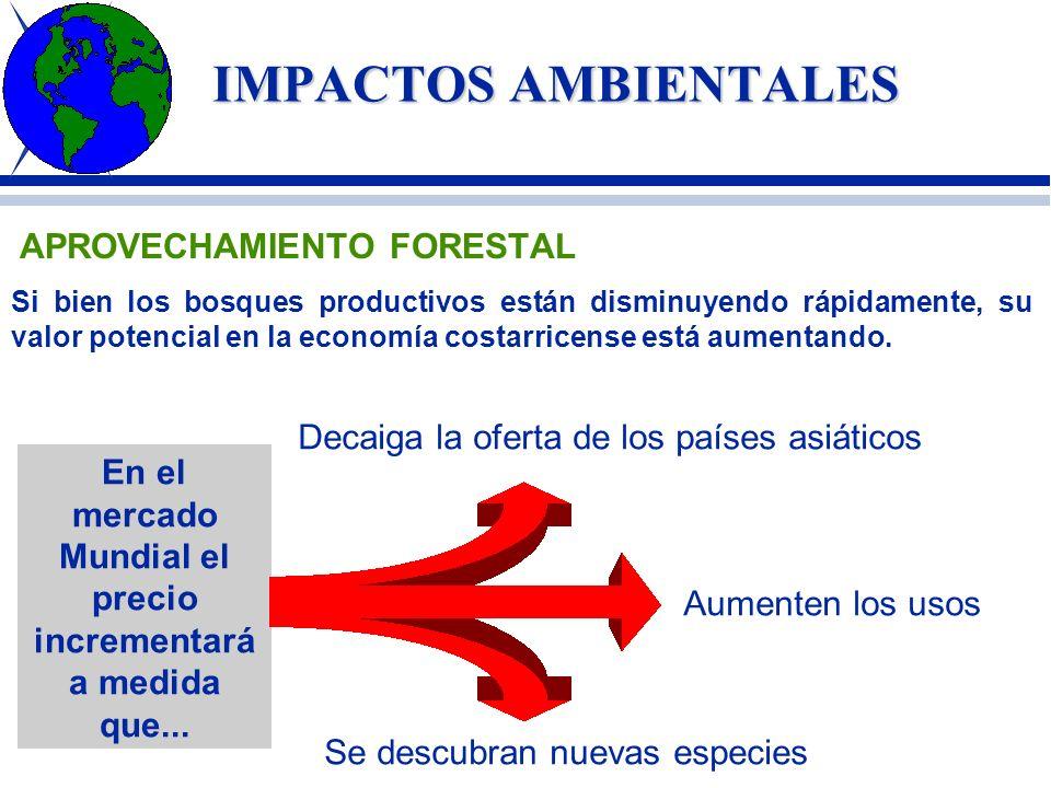 IMPACTOS AMBIENTALES La agonía de los bosques en el mundo; un desastre ecológico Debido a la creciente demanda de madera y de celulosa para fabricar p