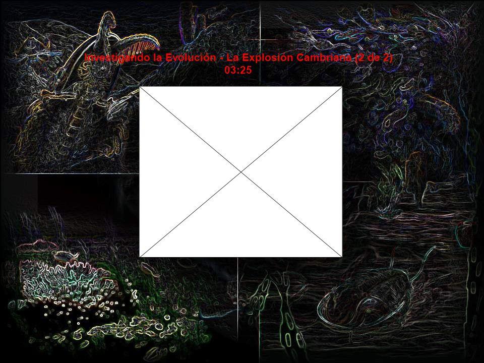 Investigando la Evolución - La Explosión Cambriana (1 de 2) 07:50