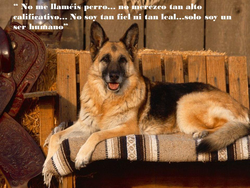 Podemos juzgar el corazón de un hombre según trata a los animales (Immanuel Kant)