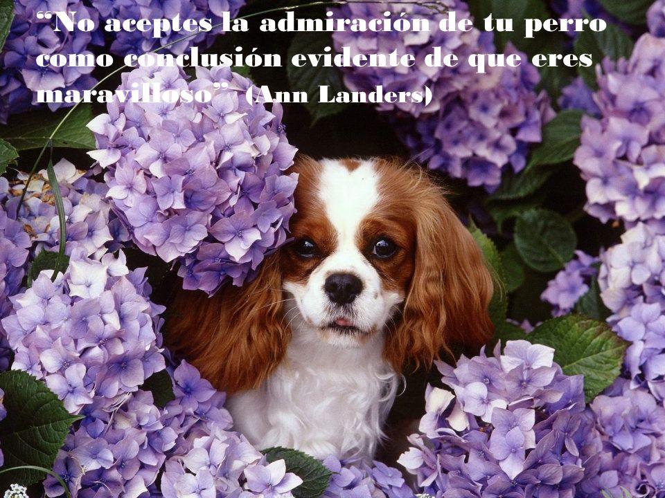 Es vergonzoso para nuestra especie que siendo el perro el mejor amigo del hombre, sea el hombre el peor amigo del perro. (Eduardo Lamazón)