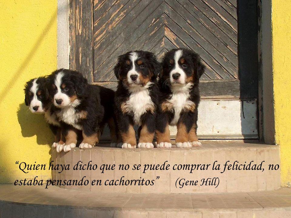 El perro sabe, pero no sabe que sabe (Pierre Teilhard de Chardin)
