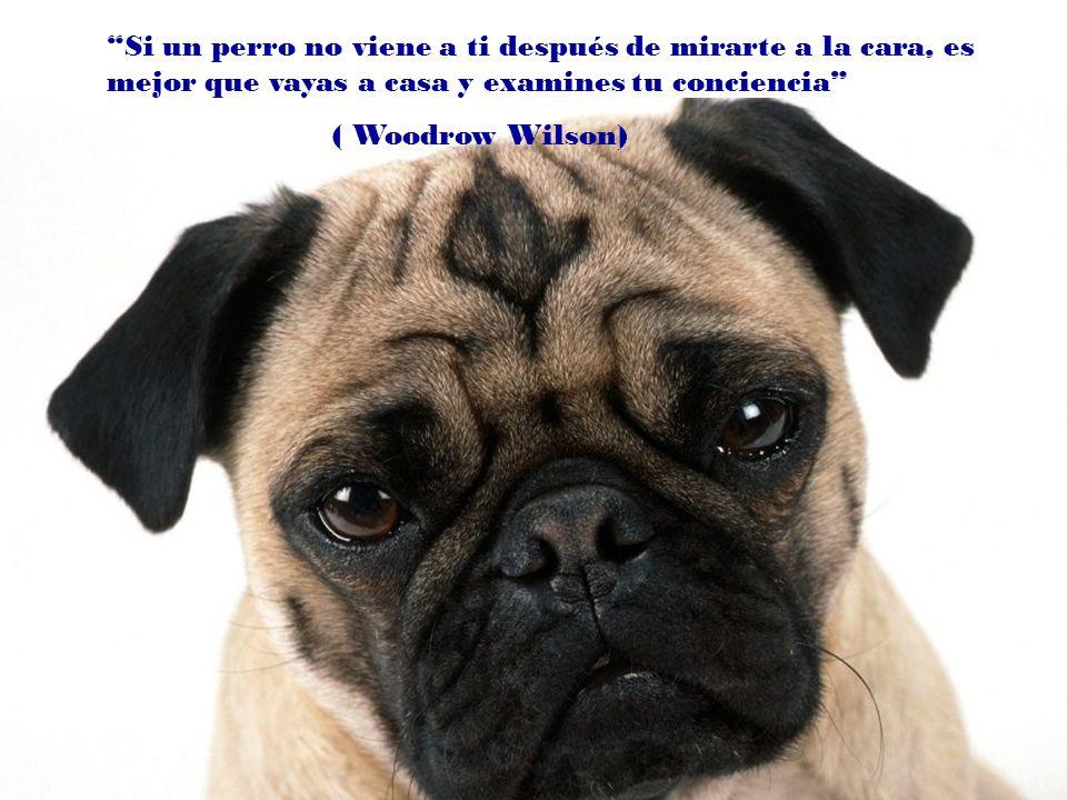 Se puede vivir sin perro, pero no merece la pena. (Heinz Rühmann)