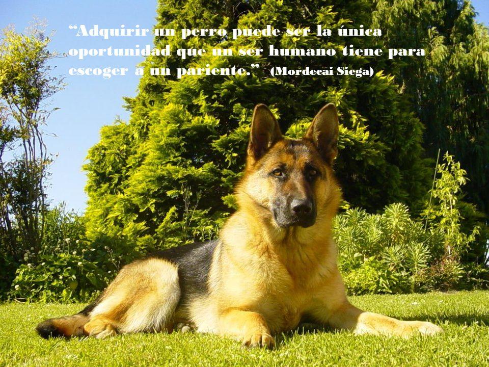 Si un perro no viene a ti después de mirarte a la cara, es mejor que vayas a casa y examines tu conciencia ( Woodrow Wilson)