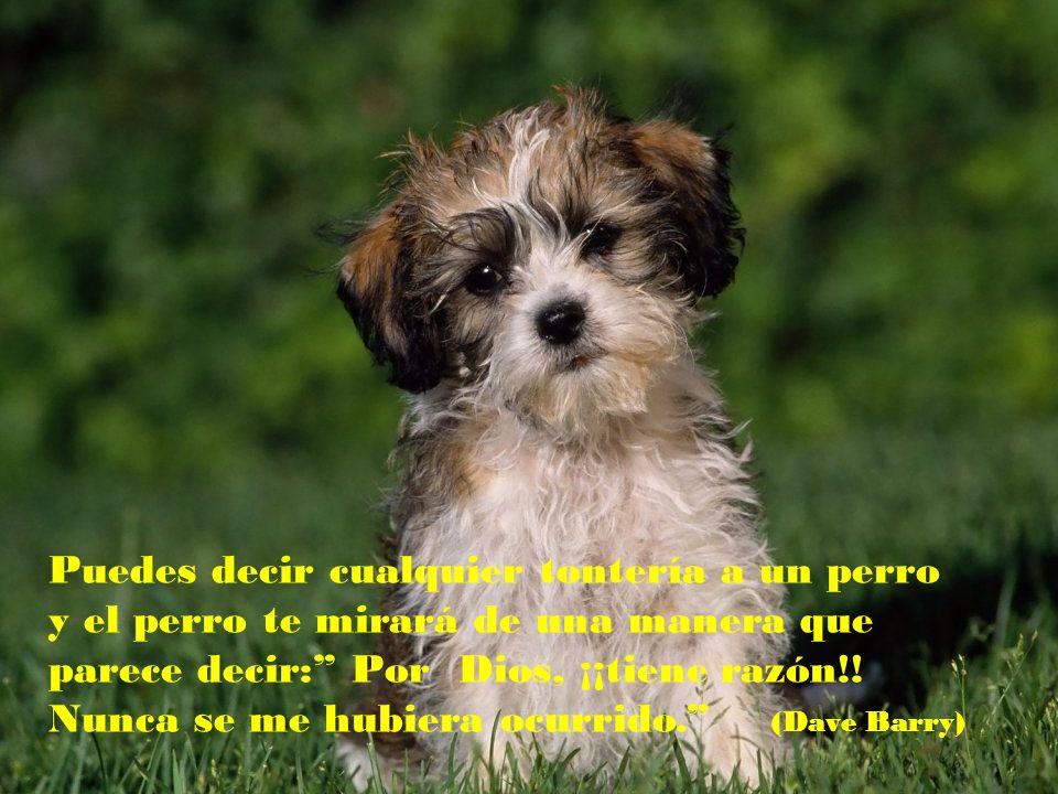 Adquirir un perro puede ser la única oportunidad que un ser humano tiene para escoger a un pariente. (Mordecai Siega)
